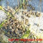 Gríðarlegur fjöldi geitunga var í búinu