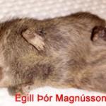 Falleg en takið eftir tönnunum, þær eru flugbeittar og fátt sem stennst þær