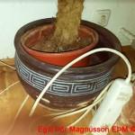 Blómapotturinn plantan var laflaus og komin hola